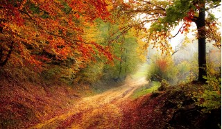 Fort d'automne